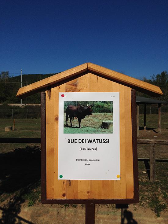 Leo wild park Todi